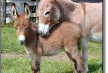 donkeys / by Prix Madonna