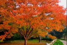 unbelieveable tree photos / by Adrienne Herrera