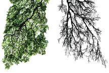 Ecology Inspiration