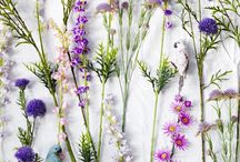 WILD FLOWERS / Inspiration of how to style, use and photograph wild flowers