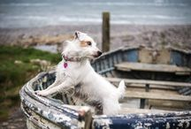 Dogs at the Seaside