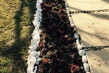 My sweet succulents ☺️☺️ / ❤️Bahçem❤️