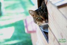 Les félins du Jardin des Chats / Venez découvrir les photos de nos pensionnaires.