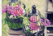 Inspire - Container Gardening