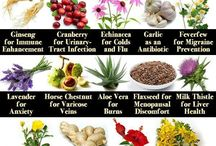 Herbal everything / Herbs, uses, gardens and wildcrafting  / by Melissa Bates
