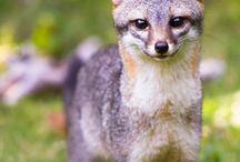 Amazing Animals / by Allyson Jaikaran