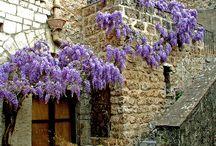 Languedoc-Roussillon-Midi-Pyrénées, FRANCE