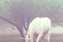 lovin' that unicorn life