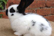 rabbits / bunnys / by Alison Scott
