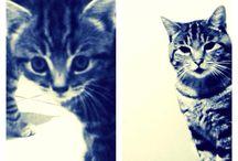 <3 / Gorgeous cats, part1/2