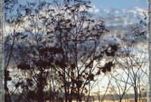 Film Photography: Instant Film