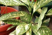 Especies de plantas