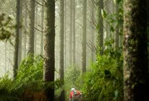 Rotorua: Mountain Biking / Amateurs to experts from around the globe agree: mountain biking doesn't get any better. With free access to an ever-growing number of scenic, evolving trails covering 130km, exploring the majestic Redwoods forest in Rotorua by bike is sure to leave you grinning.