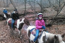 Rawhide Ranch Horses / take a look at all the horses and horseback riding that we have here at Rawhide Ranch USA
