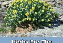 Herbs Used For Other Stuff / by haley mullinax