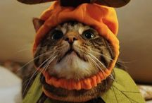 Cats and Halloween