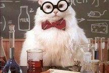Chemistry cat / by Jennie Barfield