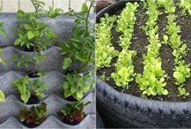 cultivo y plantas