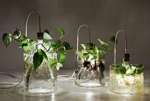 Υδρόφυτα (Aquatic plants) / Υδρόφυτα η τέλεια διακοσμητική λύση.