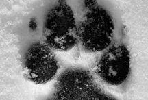 Stopi zvierat