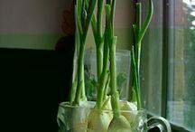 Evde sebze bitki yetiştirme