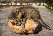 Potato / potato