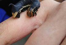 caterpillar collection