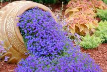 Garden beauties / Tranquility of nature makes our life more peaceful