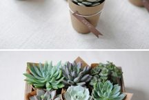 Inspire you {Succulents}