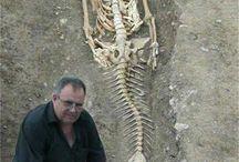 Fund arkerolog