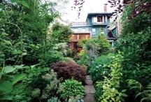 garden / by Becky Gonzales