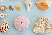 Shells - Coquillages / coquillages