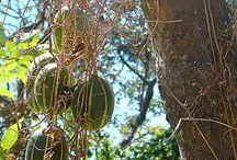 Polyclathra