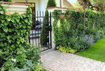 Ogród Asnyka