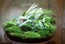 Indoor ferns / Indoor ferns