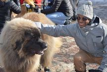 Hotel Aspen - 28th Annual Aspen Canine Fashion Show / Hotel Aspen was excited to be a part of the 28th Annual Canine Fashion Show. Thanks to Marz Timms and Greg Hollimon from HBO Comedy Central for being a part of this year's Wintersköl Celebration!