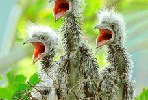 Babies,chicks