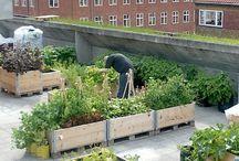 ogrodu na małej powierzchni