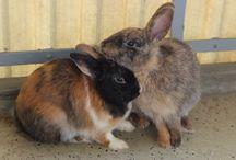 Meine Kaninchen