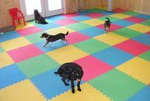 Dog daycare ideas