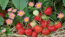Gemüse und Obst selber ziehen