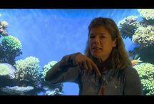 Tierney Thys' Videos / Videos by marine biologist Tierney Thys
