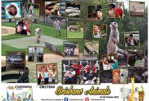 CM17044 Brisbane Animals