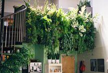 Indoors Garden / Interior design of an indoor garden.