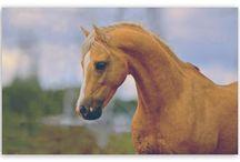 _Horses