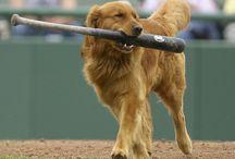 Baseball / by Ruth Rutt