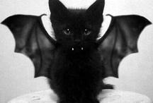 Kittens ^-^