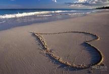 Hearts ♥♥