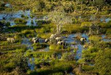 Reisetipps Botswana