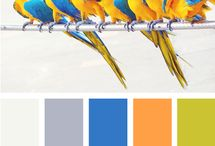 Conception de: PALETTE & PATTERN / by paperpixel